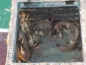 Stonecrab Trap