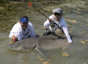 Marty Arostegui and Ralph Delph With Record 385 lb Lemon Shark
