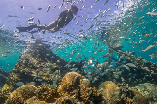 Under The Sea 12 Best Snorkel Spots In The U S