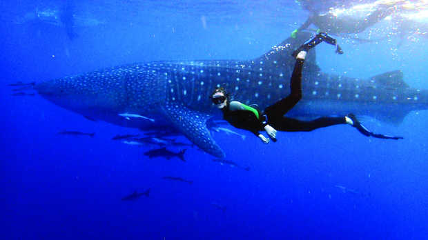 Best Shark Fishing Beaches In Florida