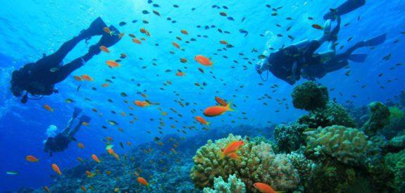 Key Largo Diving Capital